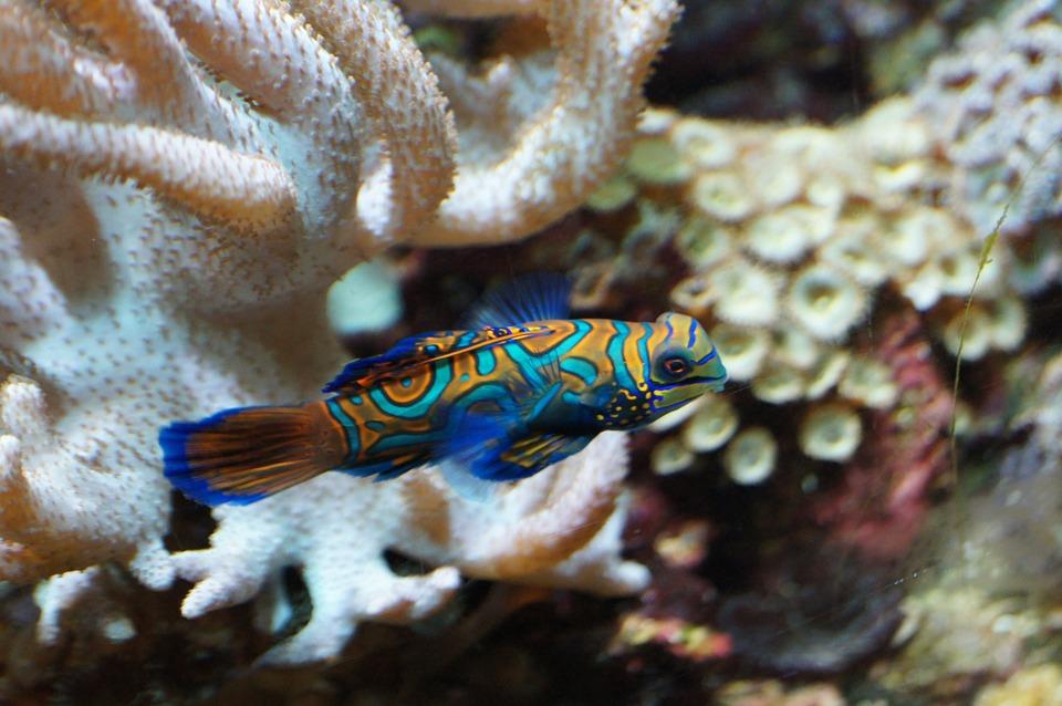 19++ Gambar hewan vertebrata ikan terbaru