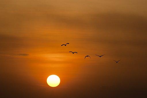 Coucher De Soleil, Mer, Soleil, Oiseaux