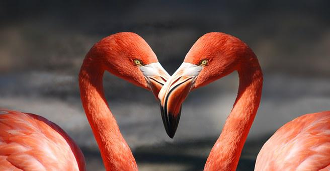 Flamingo, Valentine, Heart