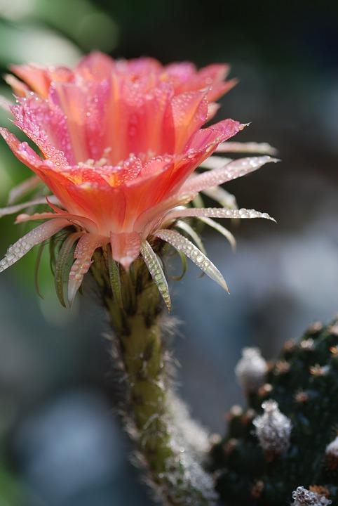 Flowers Cactus Spring Free Photo On Pixabay