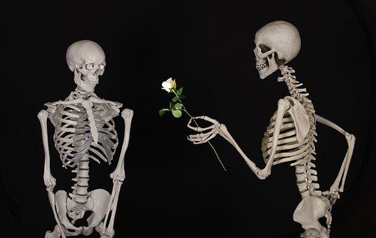 Esquelético, Flor, Felicidades, Amistad