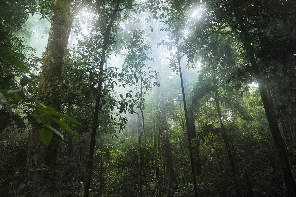 Jungle, Des Forêts, Arbres, Vert, Nature, Tropicaux