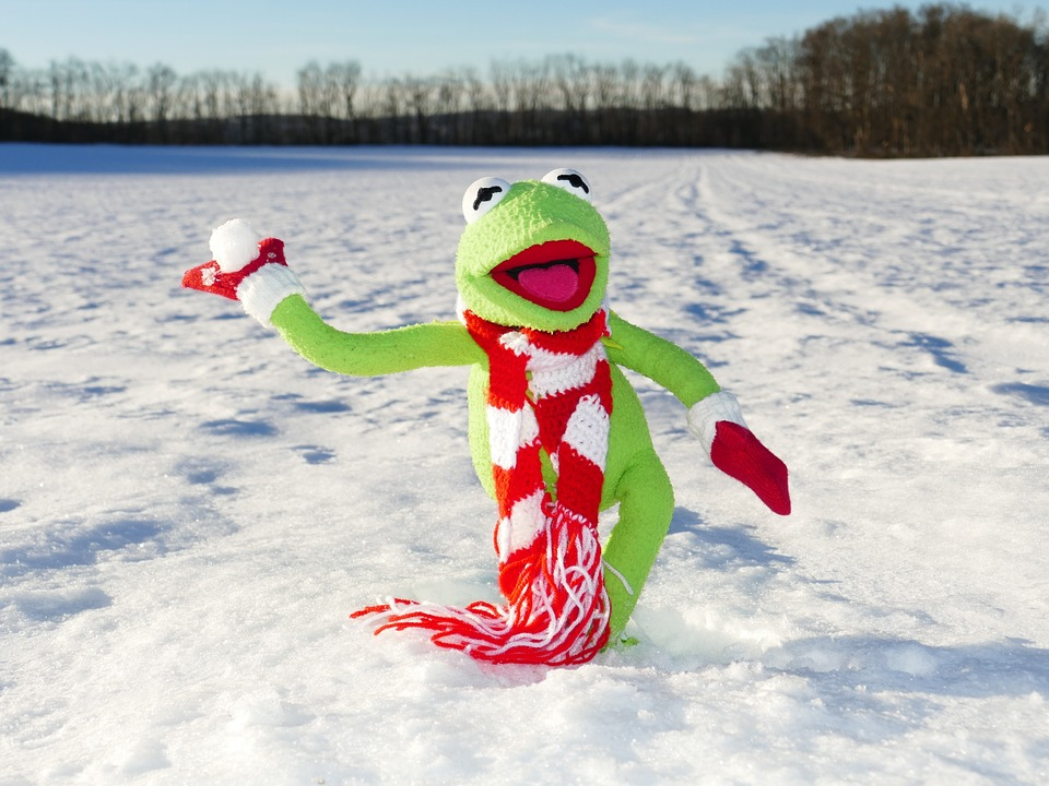 Free Photo Kermit Frog Snow Ball Throw Free Image On
