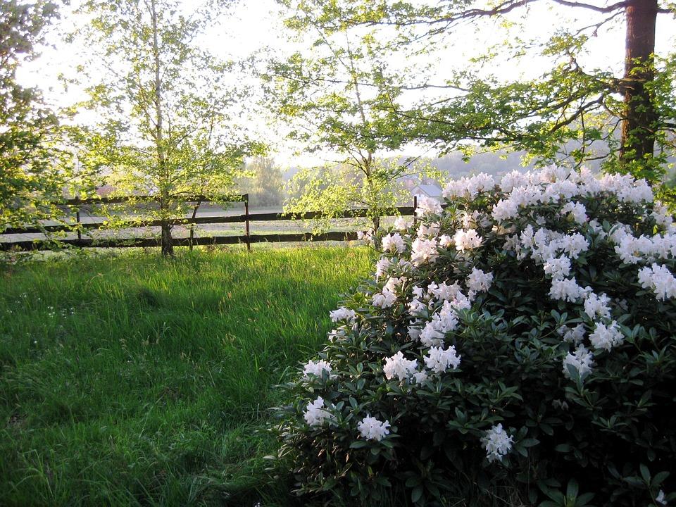 Struiken Met Bloemen Voor In De Tuin.Tuin Struik Witte Bloemen Gratis Foto Op Pixabay