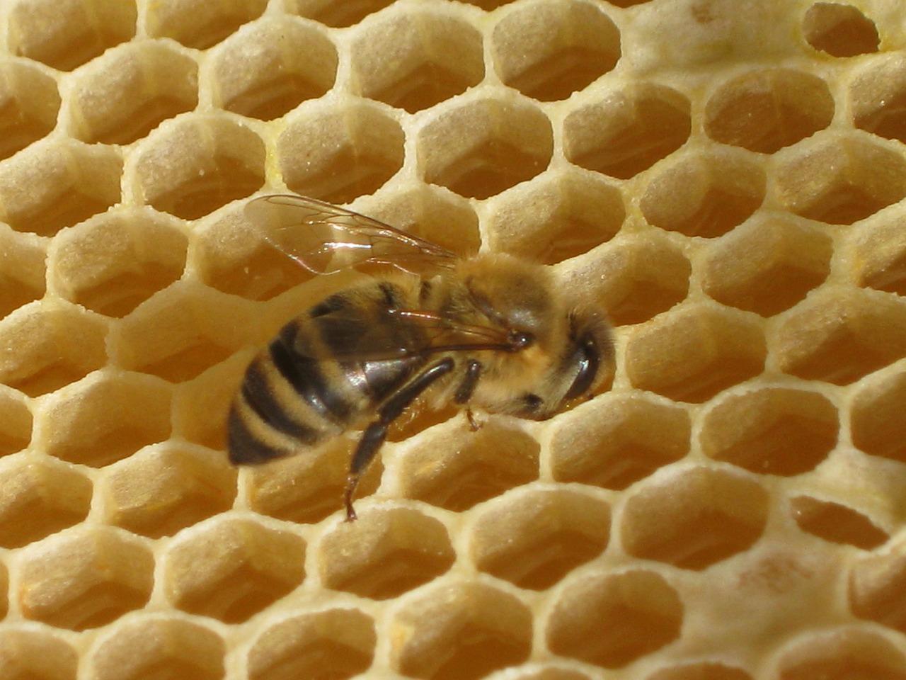 центре картинка соты с пчелами того