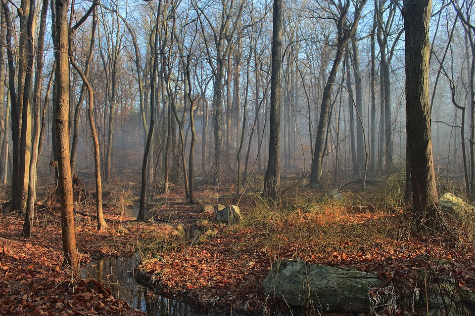 outdoor woods backgrounds. Woods Stream Water Outdoor Scenery Tree Landscape Backgrounds Pixabay