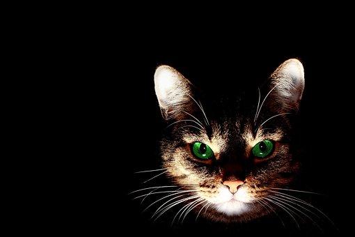 mladá mokré mačička pics Nico Robin sex Hentai