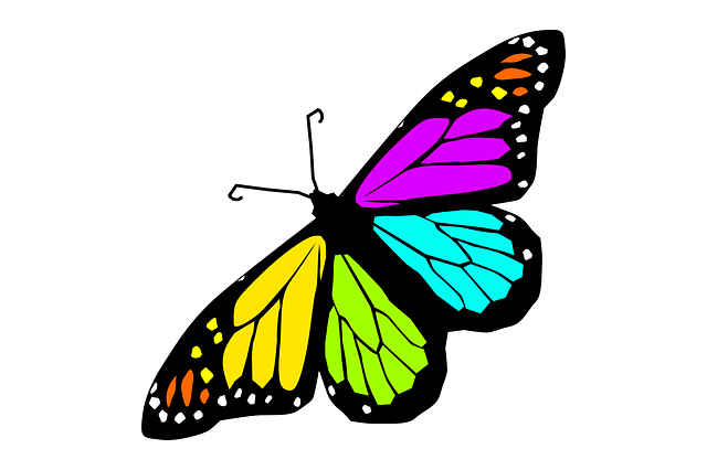 free vector graphic butterfly design spring summer