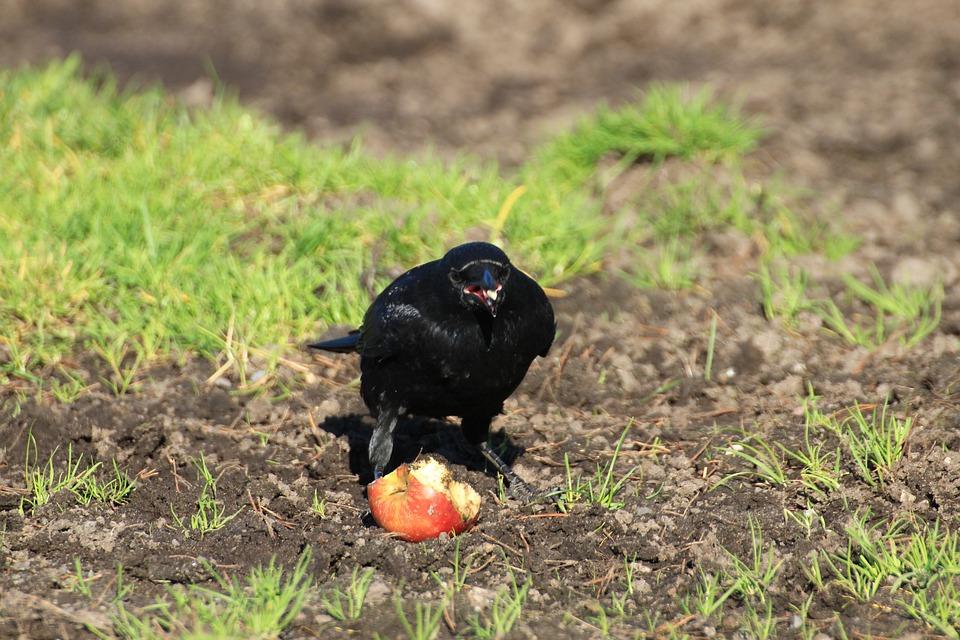Krmítko pre vtáky, pínia, so zinkovou strechou, čierne je vyrobené z píniového dreva a je opatrené lazúrou na vodnej báze.