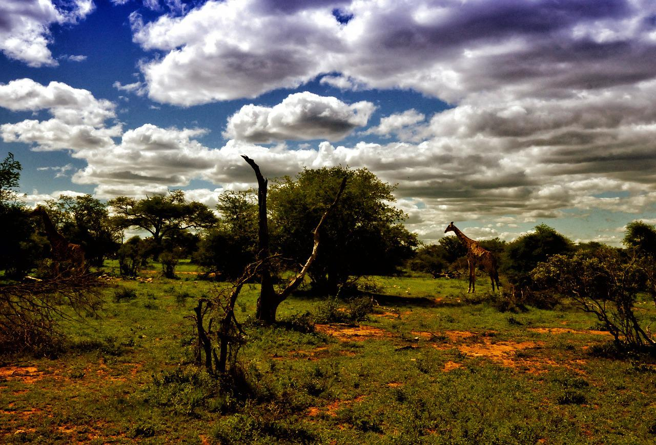 могут африканские пейзажи картинки рожденья