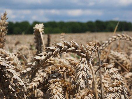 В Курской области появятся экспортоориентированные производства удобрений и переработки зерна