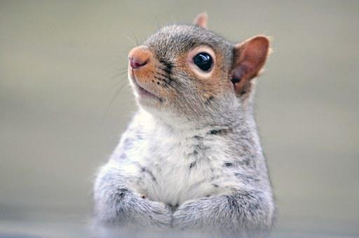 Squirrel, Rodent, Wildlife, Cute, Funny