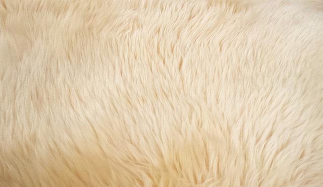 ヤギの毛 毛皮 動物 183 Pixabayの無料写真