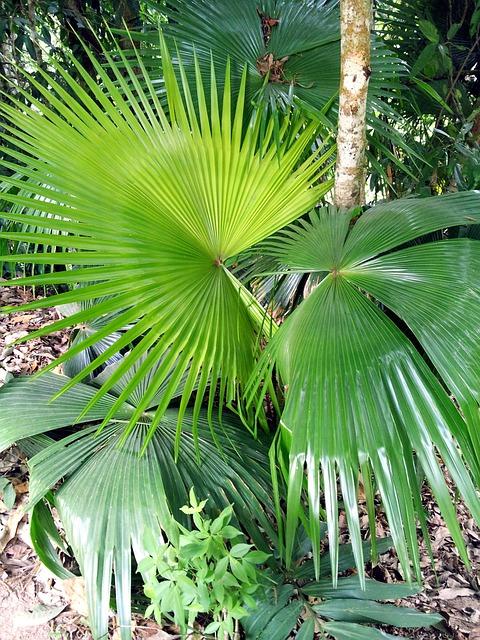 palma sheet green  u00b7 free photo on pixabay