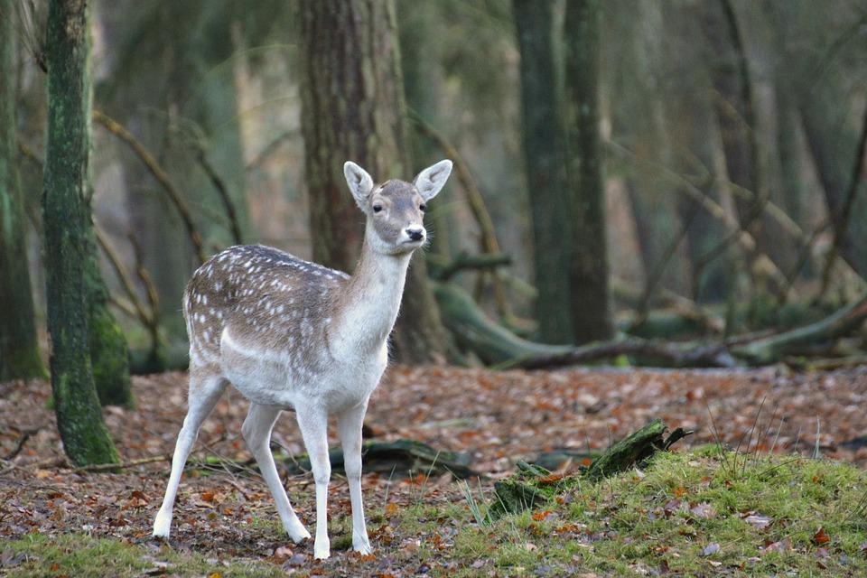 a sweet deer