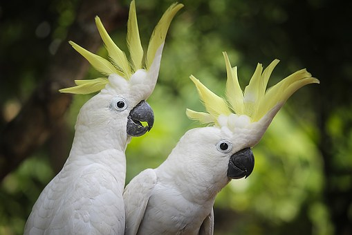 Bird White Parrot Animals View Older Sibli