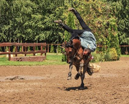 Rider Horse Horse Riding Tradition Rodeo G