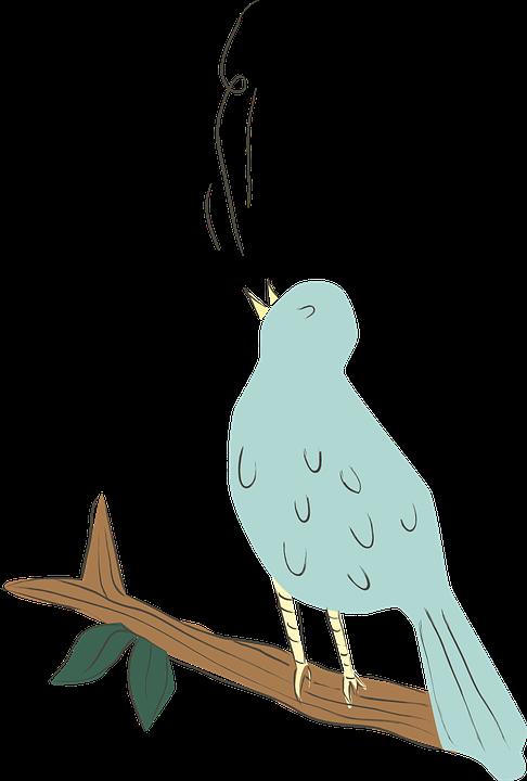 Ptak, Niebieski, Śpiewający, Natura, Zwierząt, Ładny