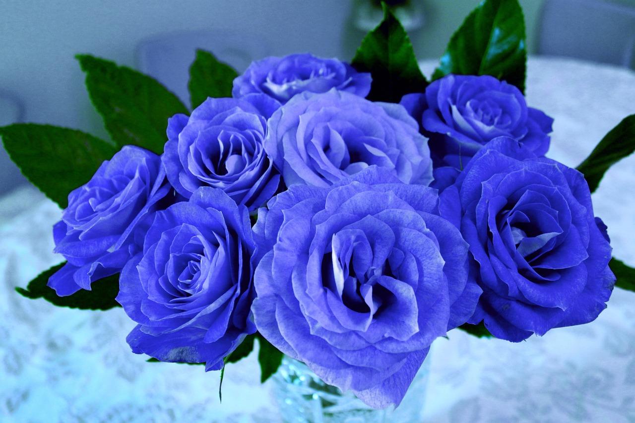 花 言葉 薔薇