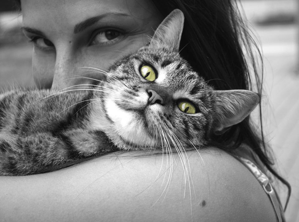 Animali, Gatto, Ragazza, Felicità, Emozioni, Abbraccio