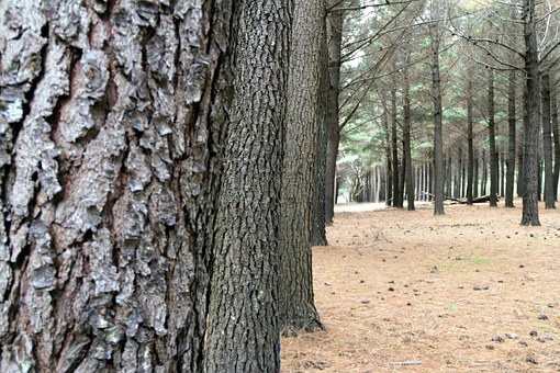 prodej lesů