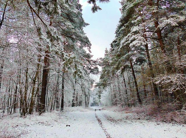 free photo  winter  forest path  snow  wintry