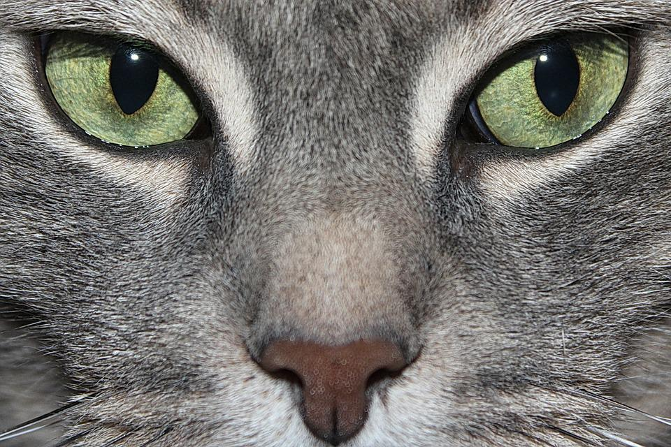 Cat S Eyes To Colore In