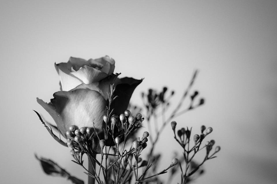 Rosa Flor Blanco Y Negro Foto Gratis En Pixabay