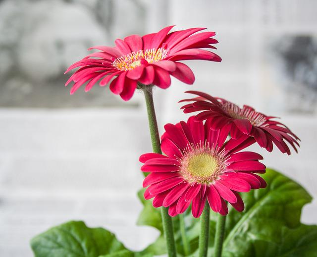 photo gratuite fleur printemps t jardin image gratuite sur pixabay 620390. Black Bedroom Furniture Sets. Home Design Ideas