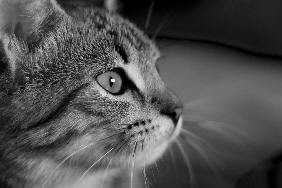 animal eye black and white - photo #26