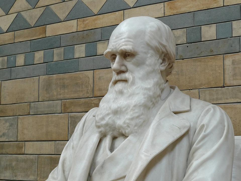 Darwin, Naturhistorie, Museum, Evolusjon, Naturlig