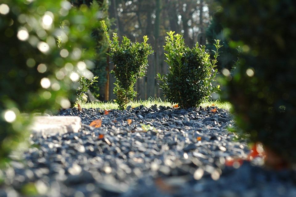 Stenen, Buxus, Landschap, Kiezelsteen