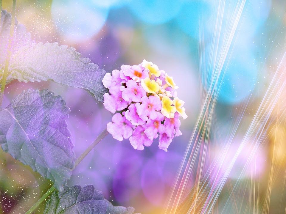 bunga lantana mekar foto gratis di pixabay