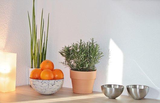 Still Life, Decoration, Culinary Herbs