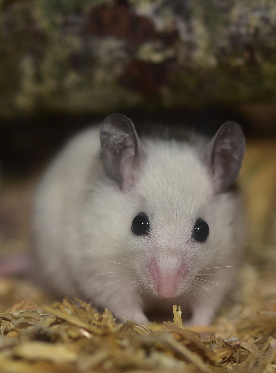 Мыши картинка