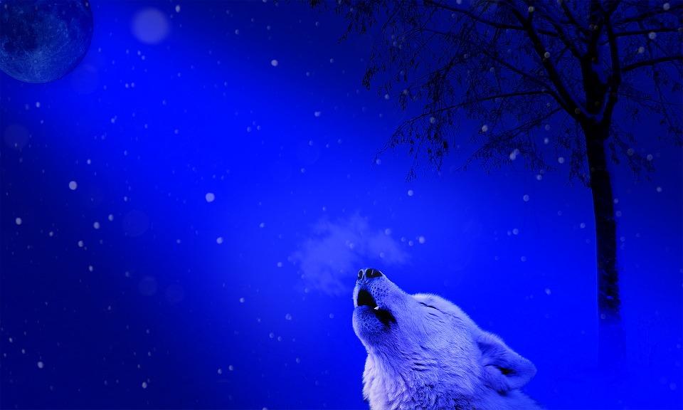 A cold night in december xxx dvdrip - 4 4