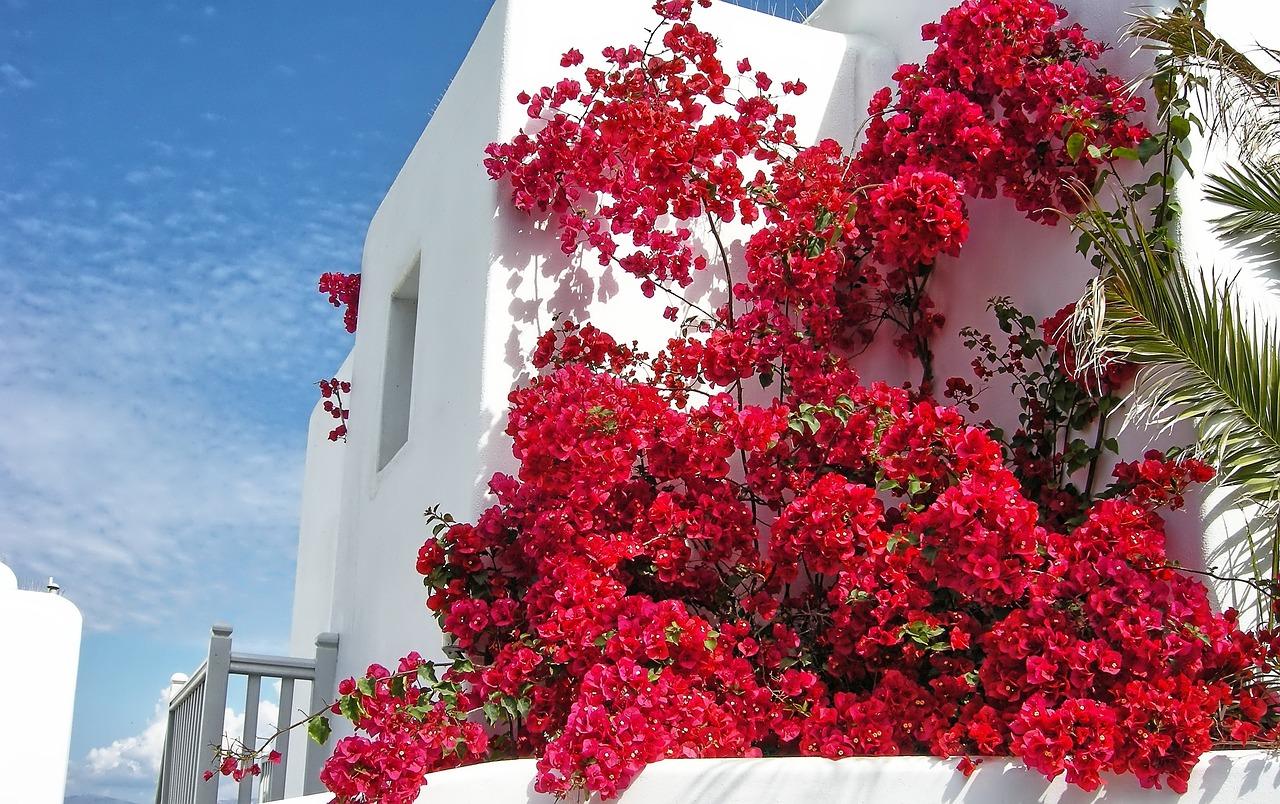также можно цветы греции фото и названия усложнённым, менее