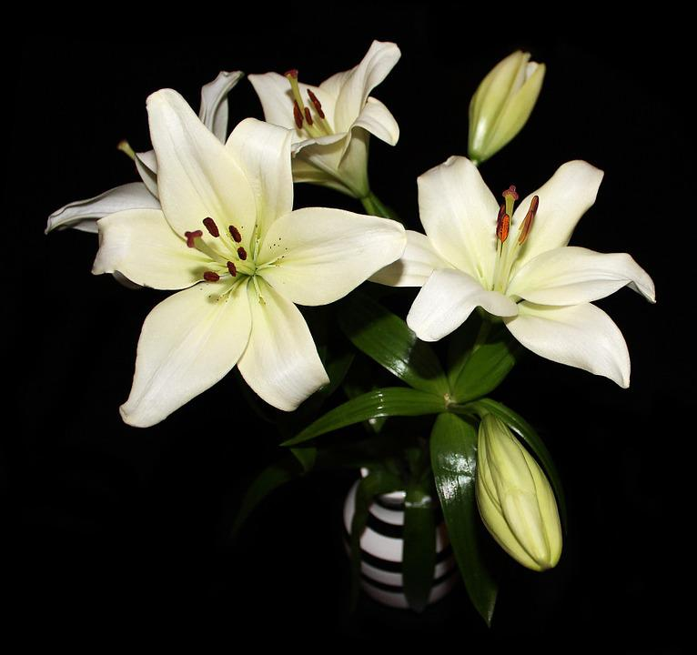 free photo lilies, flowers, bouquet, white  free image on, Beautiful flower