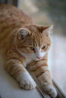 zadarmo videá z horúcej mačička