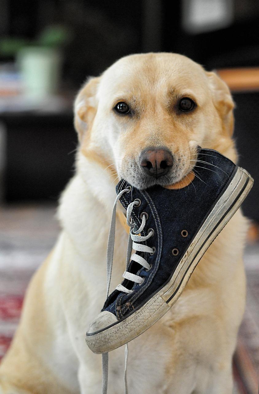 картинки собака с тапками оформлении паспорта гражданин