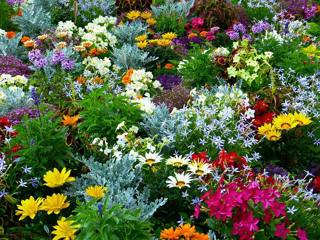 Free Photo Flower Garden Garden Flowers Free Image On