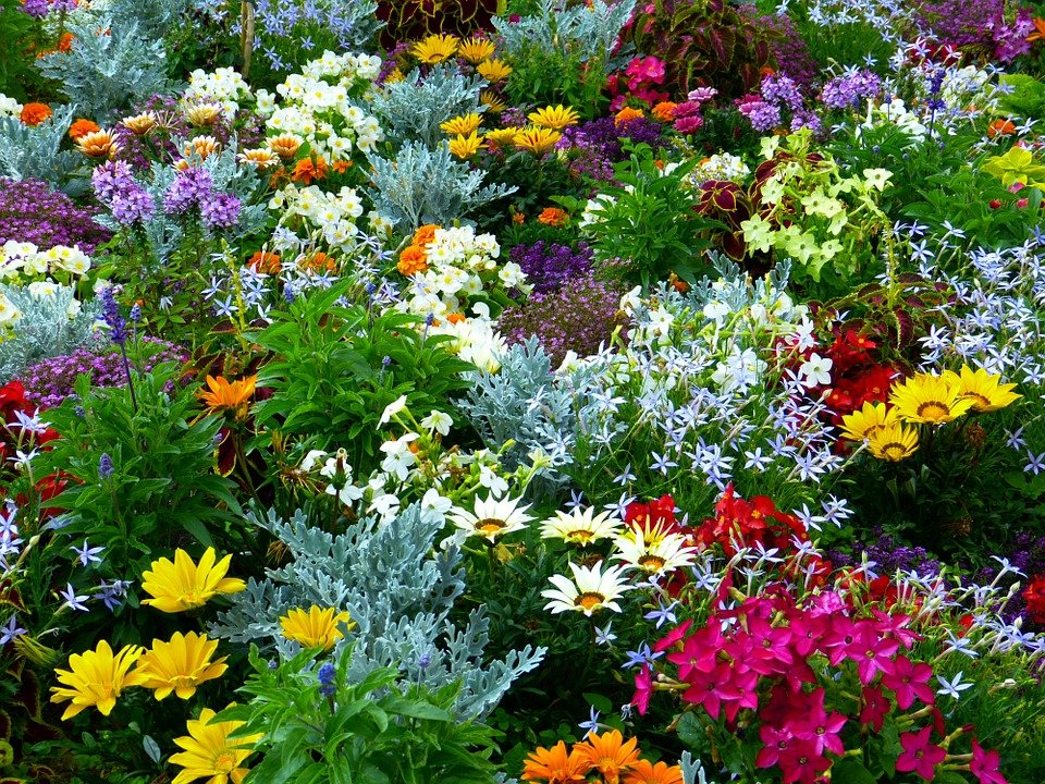 Free photo flower garden garden flowers free image on for Free perennial flower garden designs