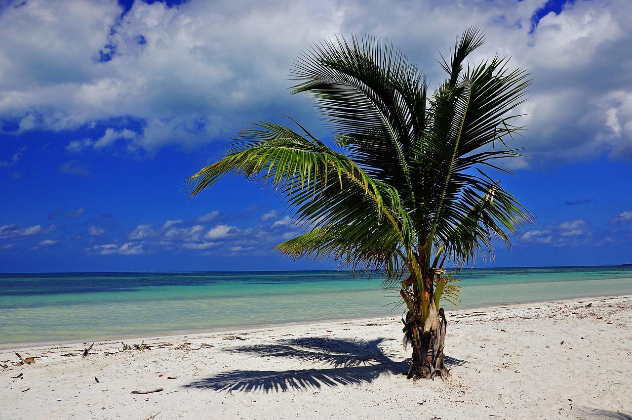 трофеи все фото морского побережья кубы этом симпатичные