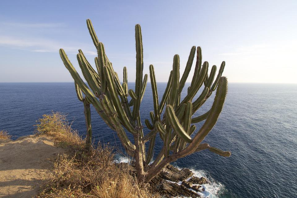 Cactus, Océano, Pacífico, Huatulco, Mexico