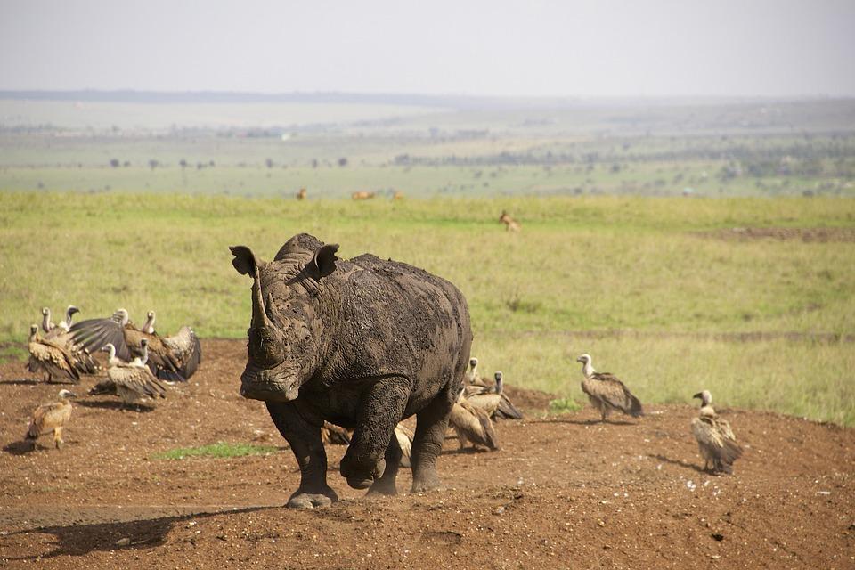 afrikanza-nairobi-rhino