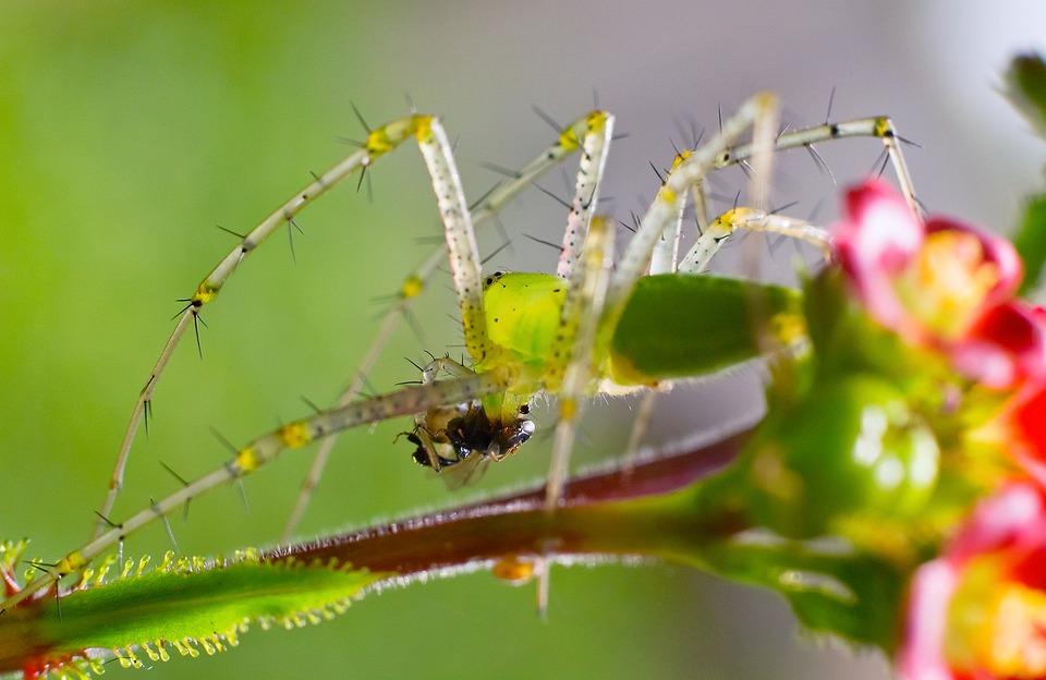 大溪種下波斯菊及百日草等種子 預計11月初陸續綻放
