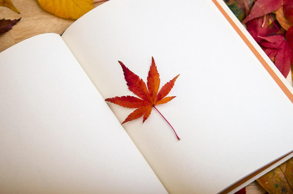 Free Photo Maple Leaf Book Reading Free Image On