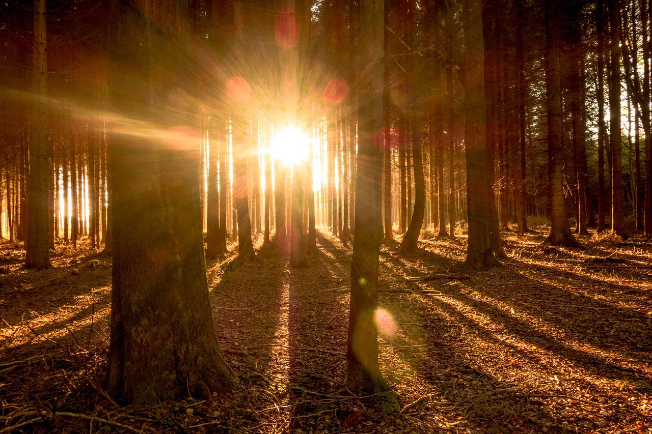 выстраиваются колонну как фотографировать лучи света переход одного оттенка