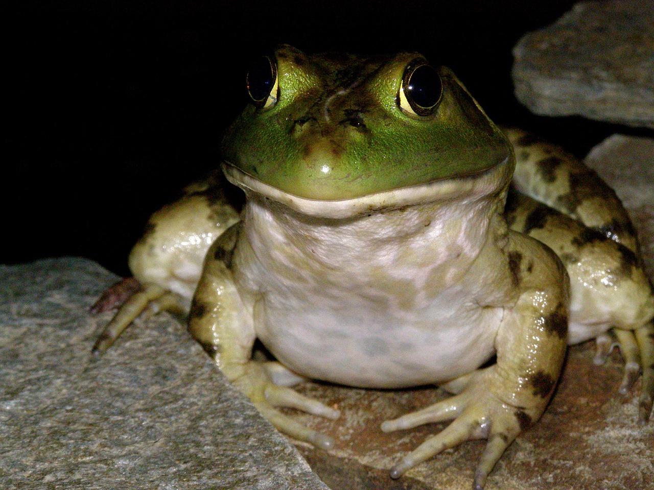 них картинка обиженная лягушка радиусными