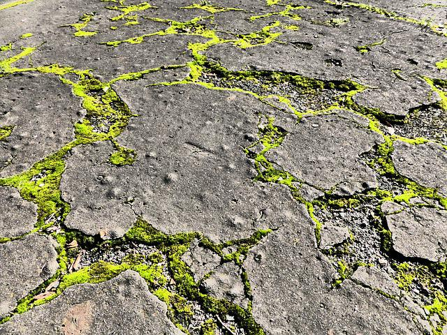 Free photo concrete moss street crack free image on for Aphtes remede maison